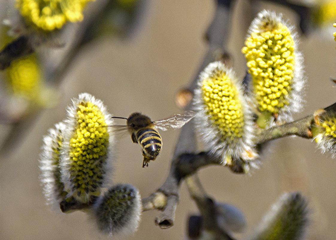 весна - оксана