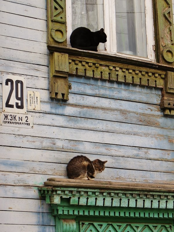 Добрые соседи . - Святец Вячеслав