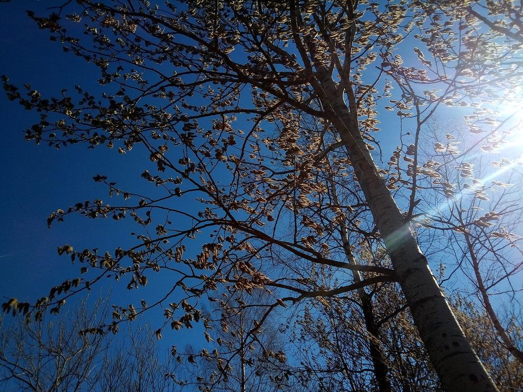 Солнца луч, неба синь - Елена Павлова (Смолова)