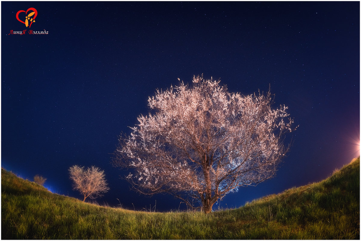 Цветущий апрель под звёздами - Антон Сологубов