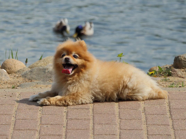 щенок - Андрей