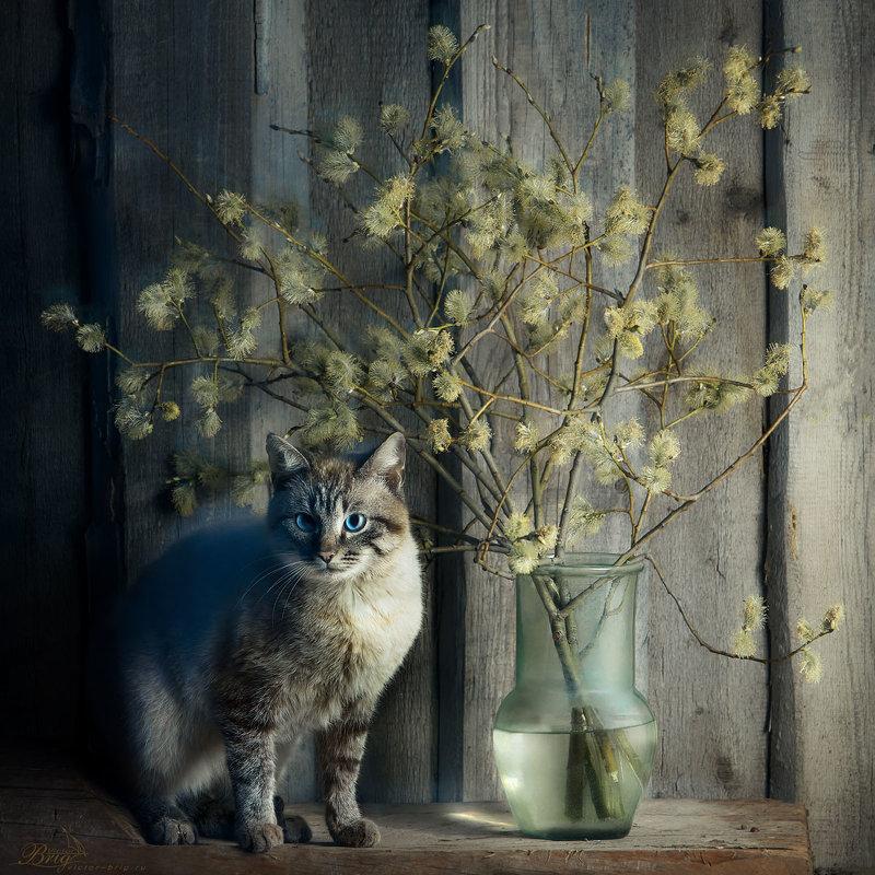 """""""Кошачья весна"""" - Victor Brig"""