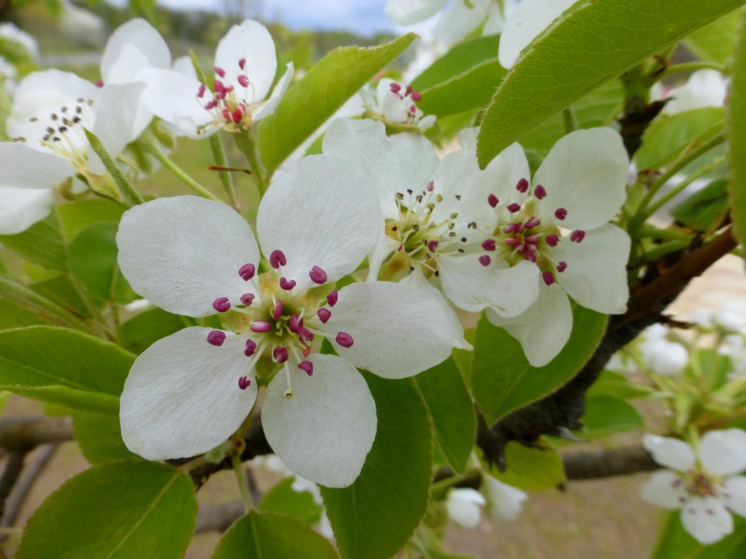 Цветущая весна - Татьяна Лобанова