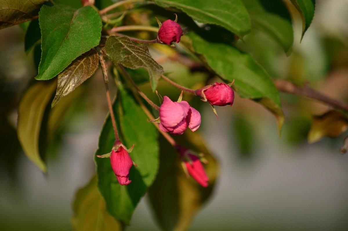 Цветение яблони - Tim Andrews
