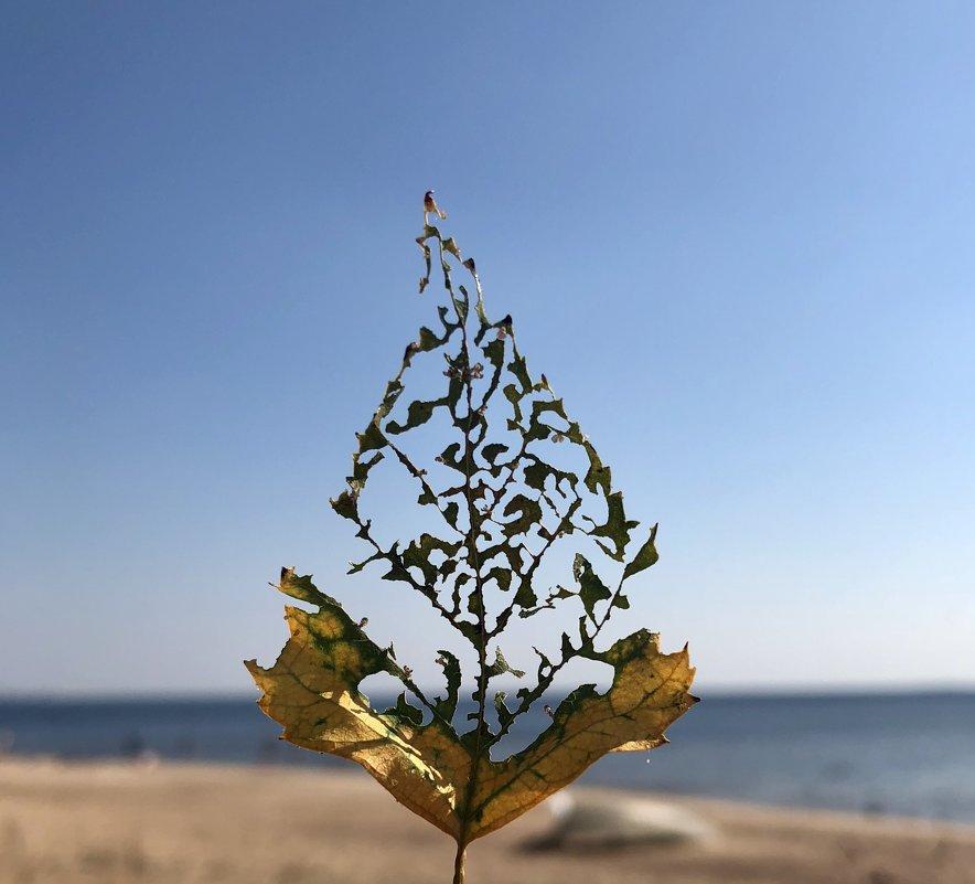 Затейница-природа - Ирина Коноплёва