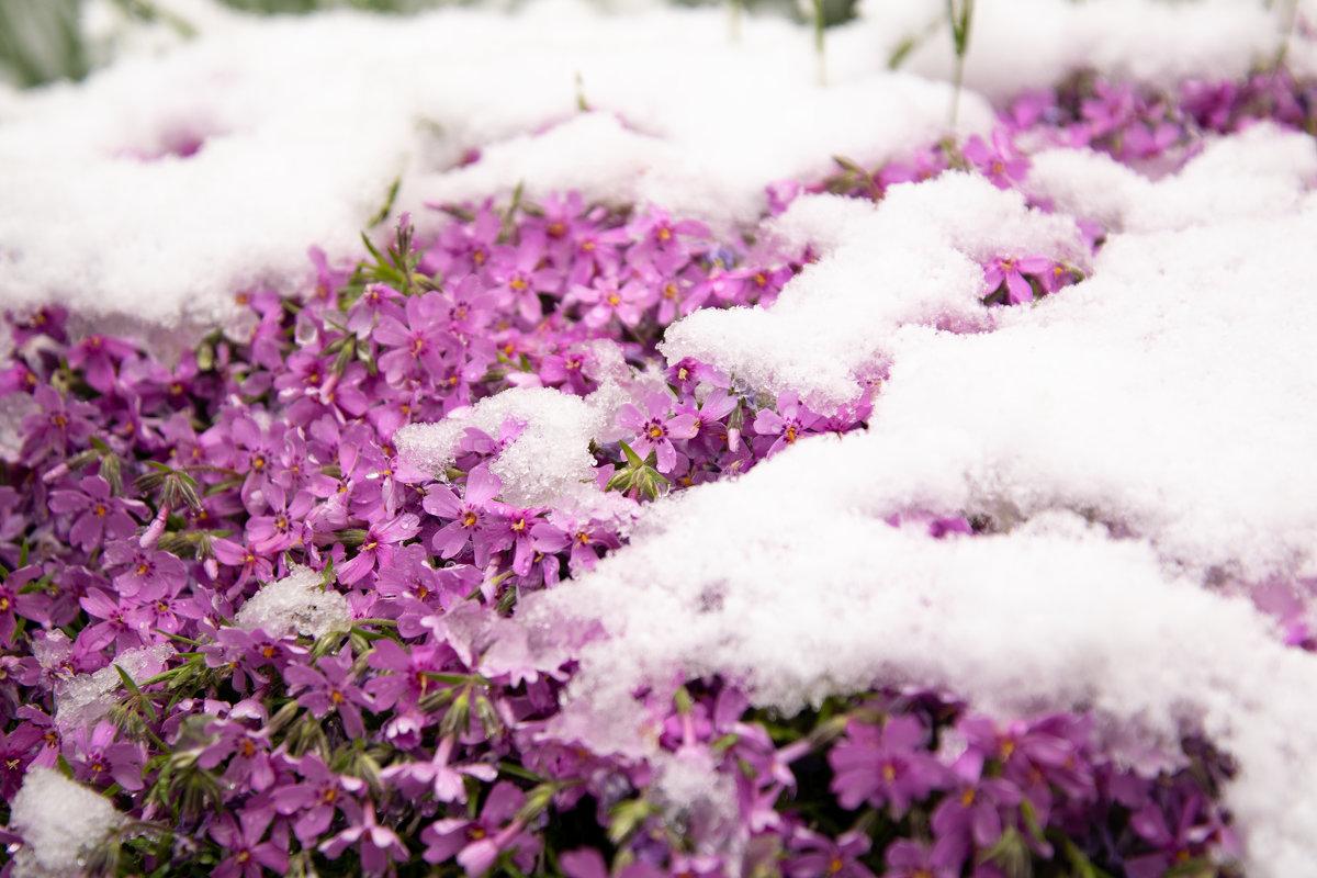 зима против весны - Alexandr Staroverov