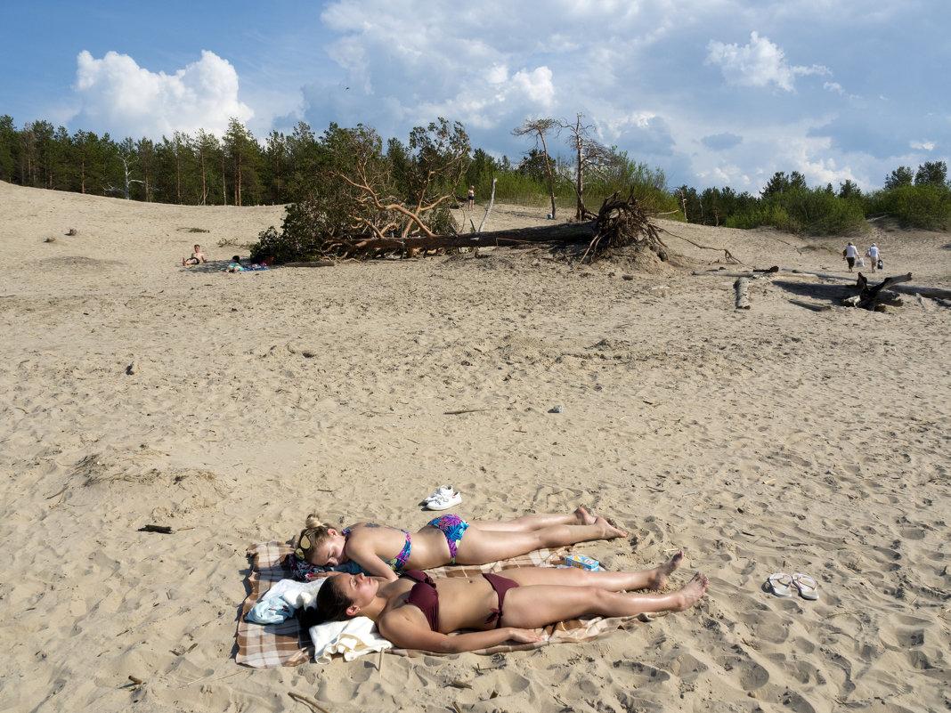 В Северодвинске погибли две сосны - символ ягринского бора - Владимир Шибинский