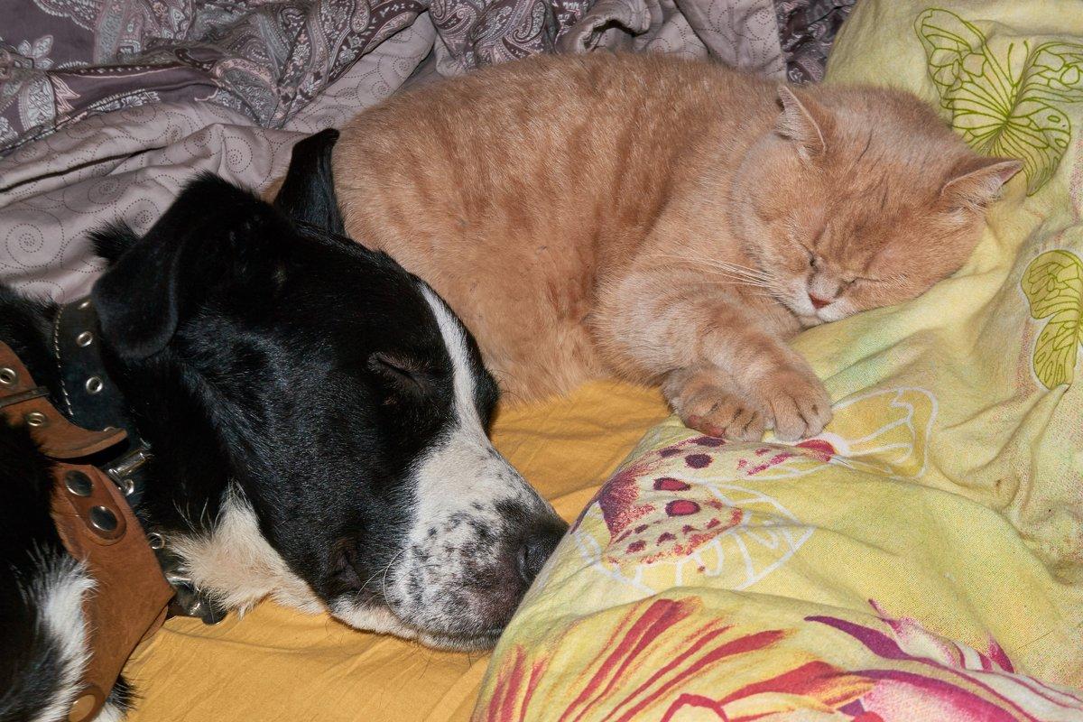 Как кошка с собакой - Александр Протопопов