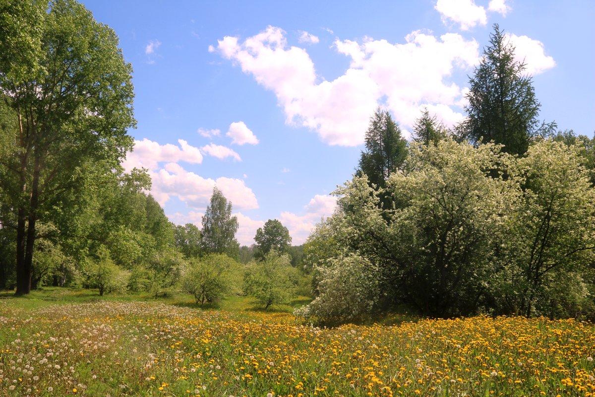 Один раз в год сады цветут... - владимир тимошенко