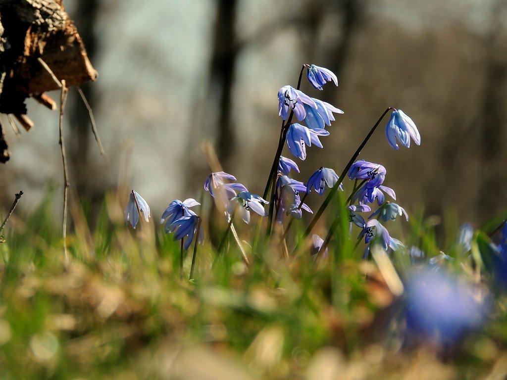 Весна - Роман Савоцкий