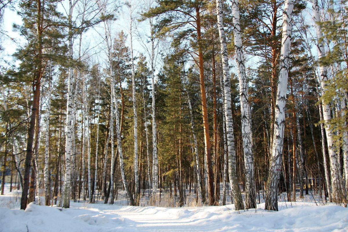Лес в санатории - Олег Афанасьевич Сергеев