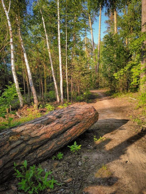Летом в лесу - Александр Шишин