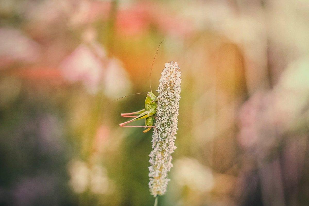 В траве сидел... - Татьяна Ковалькова