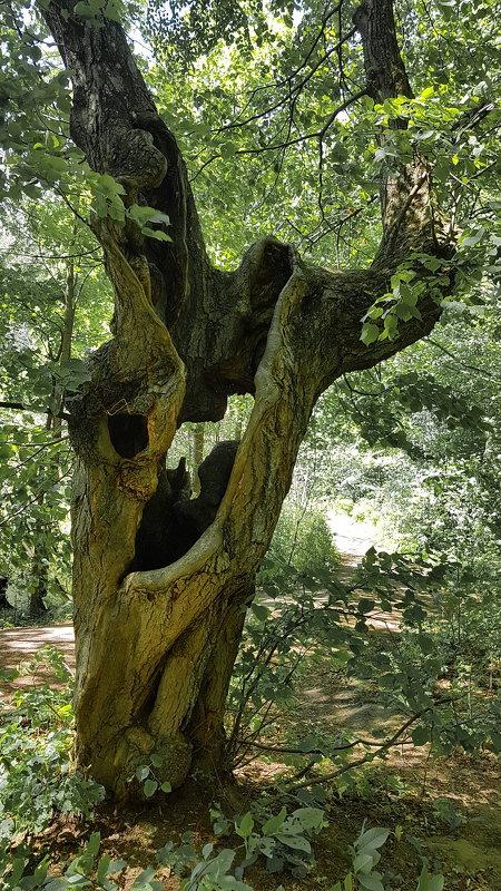 Хранитель леса - Андрей Зайцев