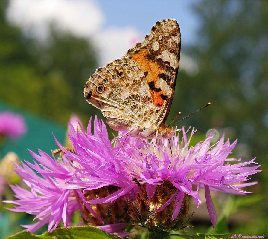 Счастье подобно бабочке: нужно просто подождать, пока оно сядет вам на плечо… - Андрей Заломленков