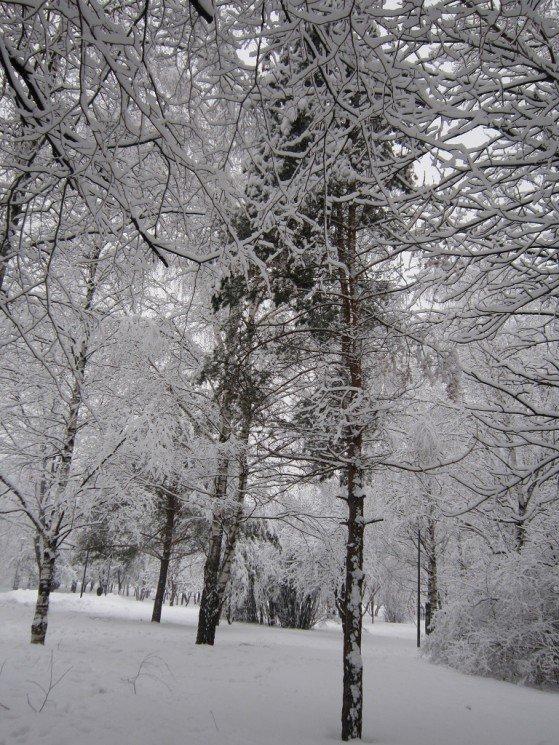 Зимние красоты - Дмитрий Никитин