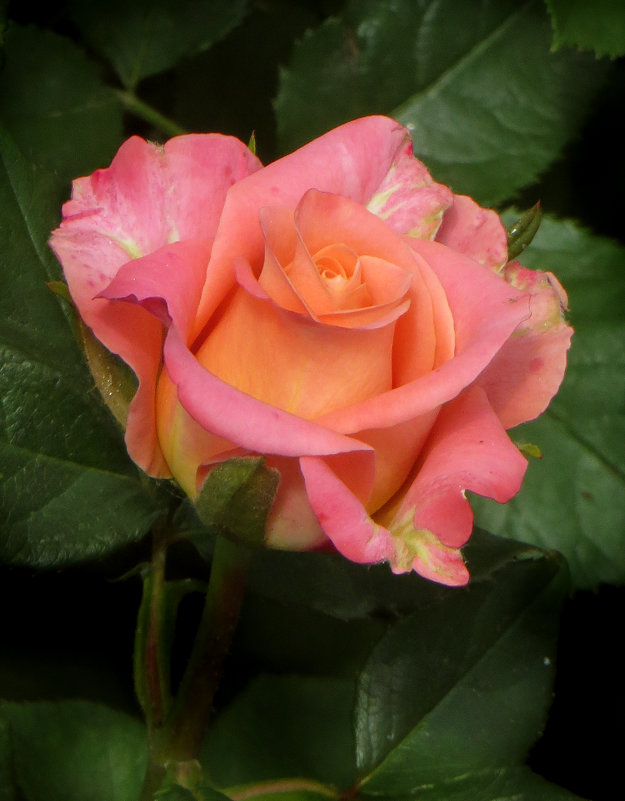 Фото сессия для роз. фото-2. - Nata