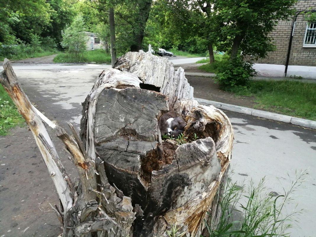 Сон час) - Виталий Городниченко