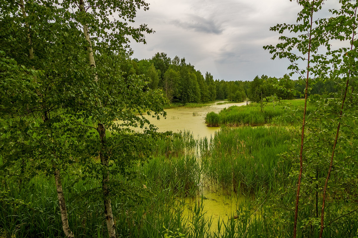 Озеро в лесу 2 - Андрей Дворников