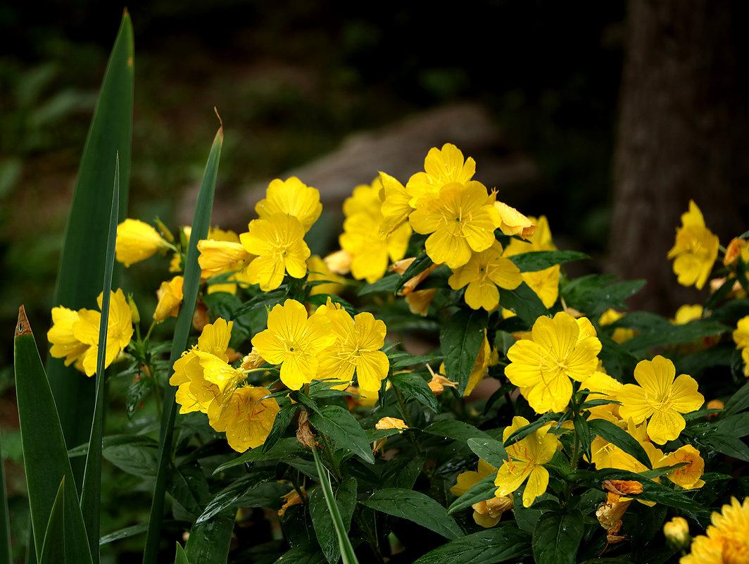 Какие-то цветочки - Светлана