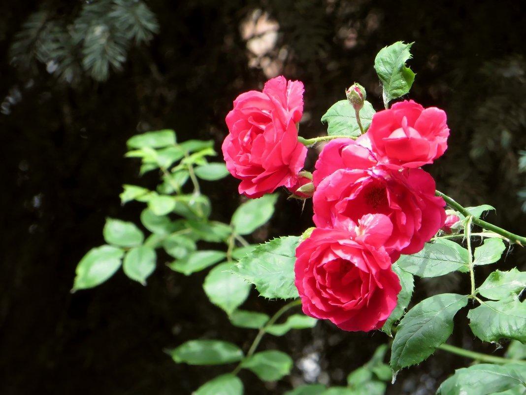 Нам у цветов бы обаянью поучиться... - Татьяна Смоляниченко