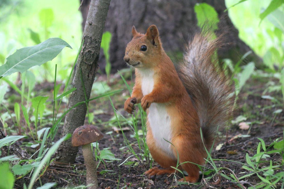 Сценка в лесу - владимир тимошенко