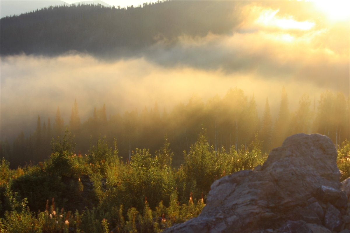 Туман и солнце - Сергей Чиняев