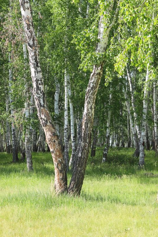 тихо в лесу - Елена Красильникова