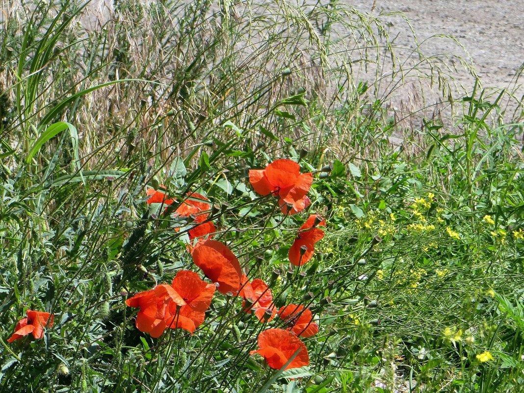 Среди благоухающей травы растут цветы, как Ангелов посланье - Татьяна Смоляниченко