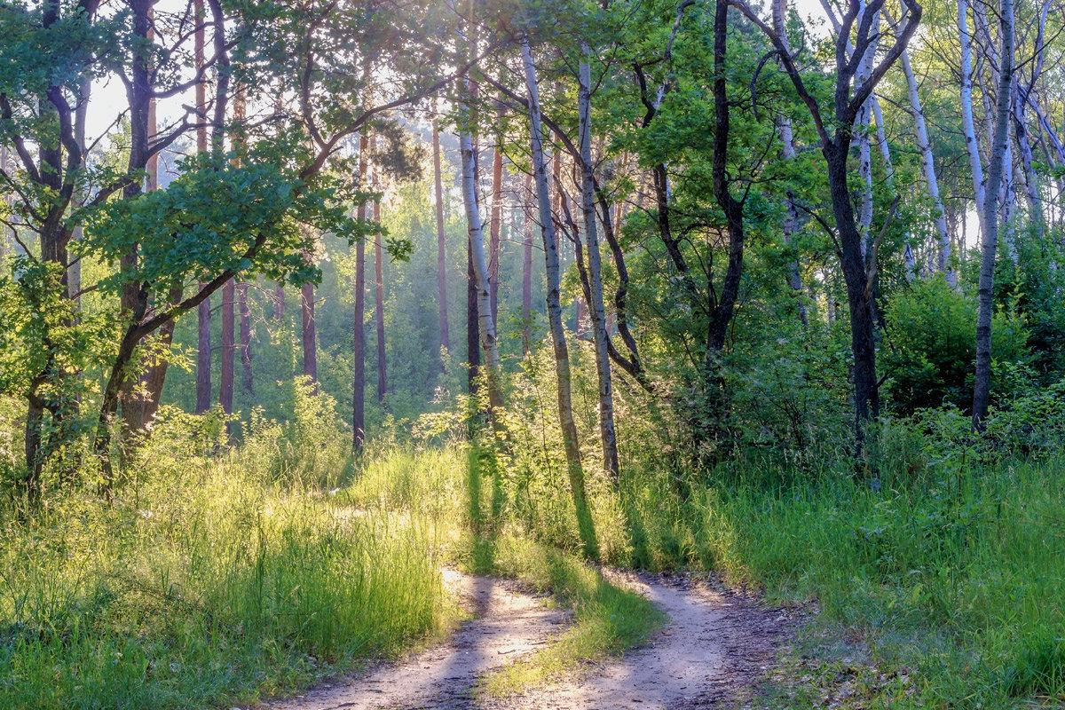 Ранним утром в лесу - Юрий Стародубцев