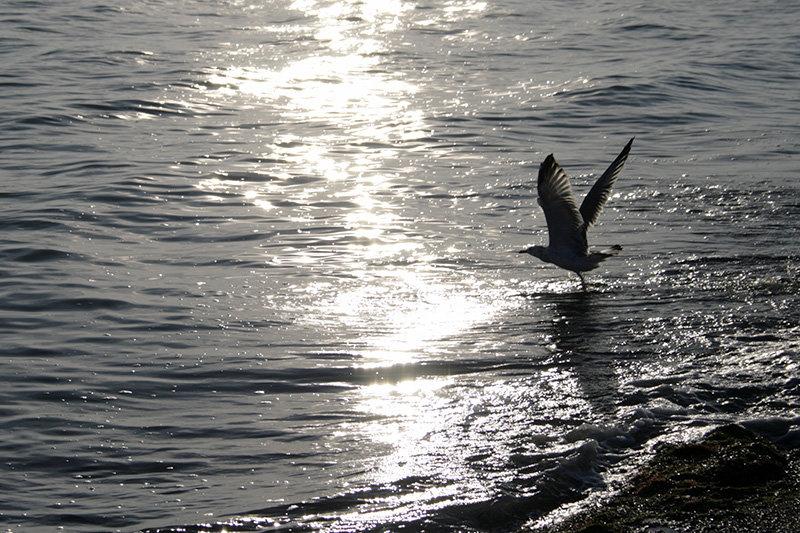 Море манит. - Sergii Ruban