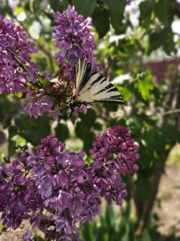 Бабочка - Ольга Почепаева