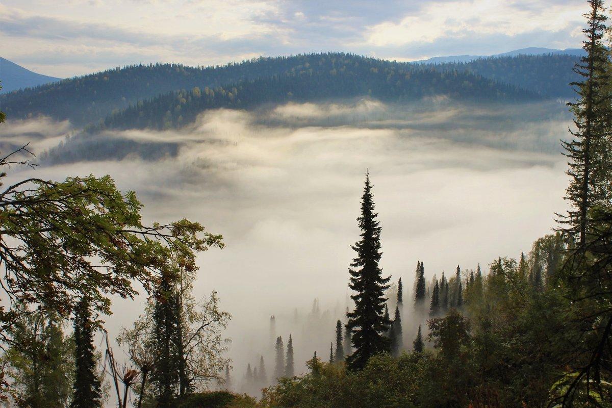 Утро с туманом - Сергей Чиняев