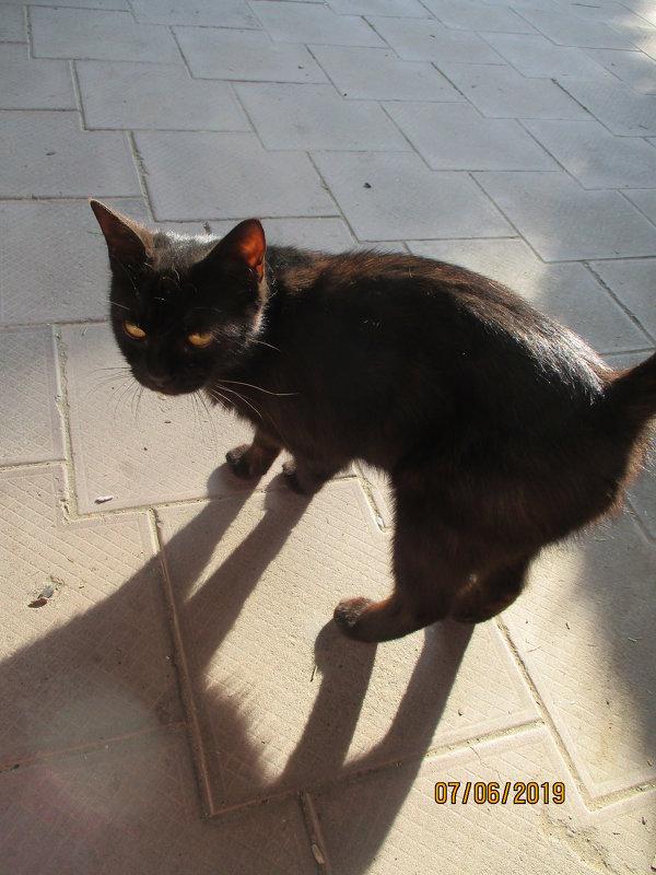 Черный кот. - Зинаида