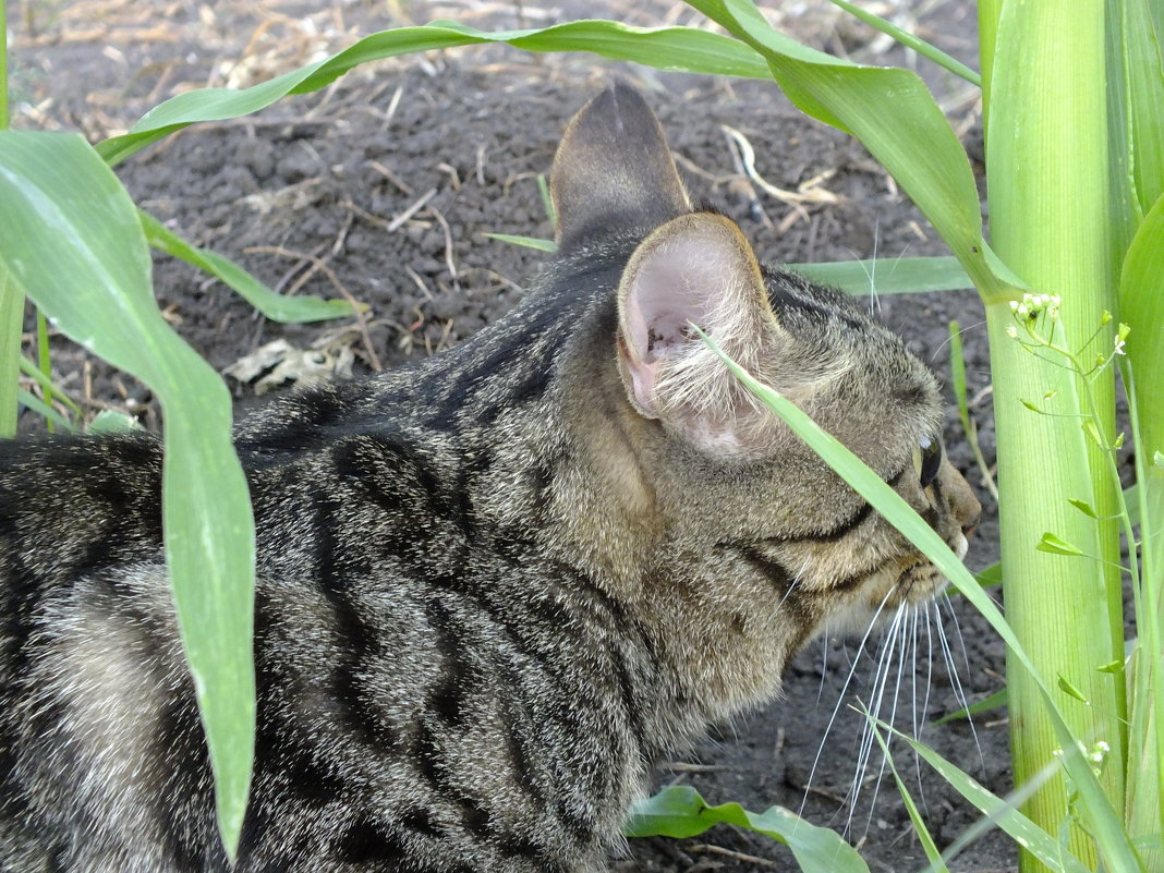 Мой кот-огородник)))) - Алексей Кузнецов