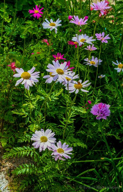 Июньское разноцветье - Елена Митряйкина