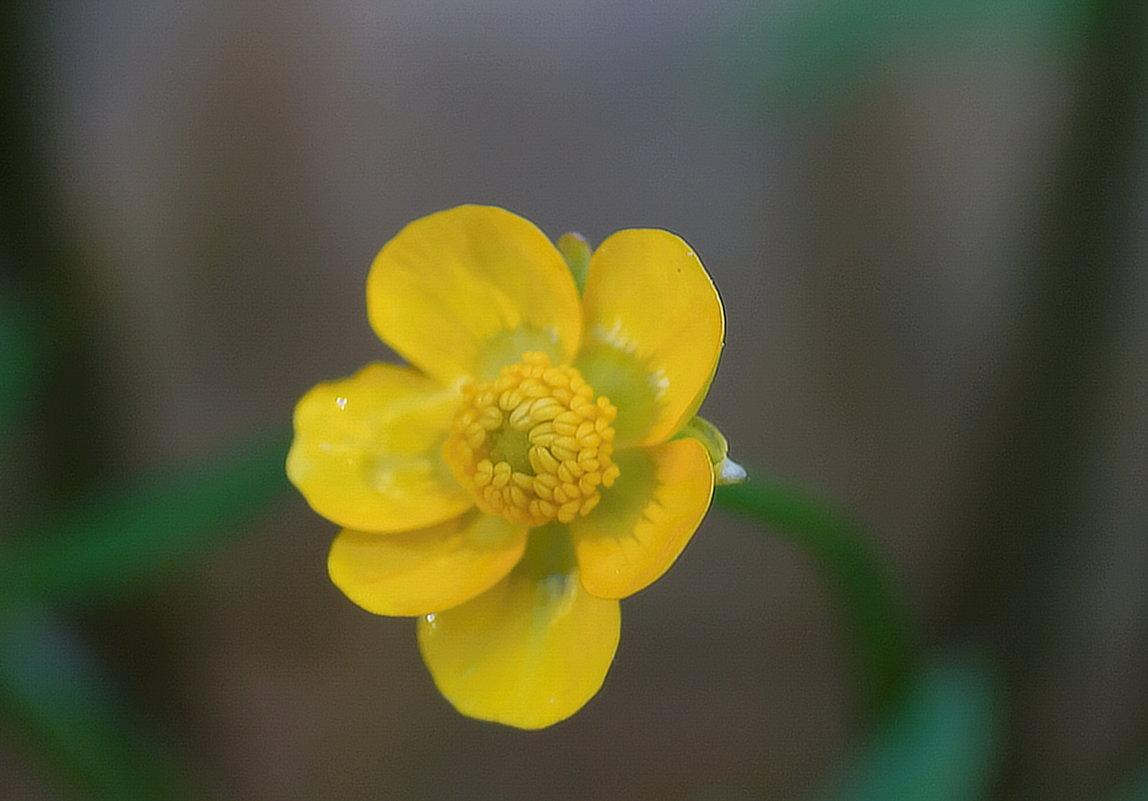 Лютики-цветочки у меня в садочке - miss victorowna викторовна