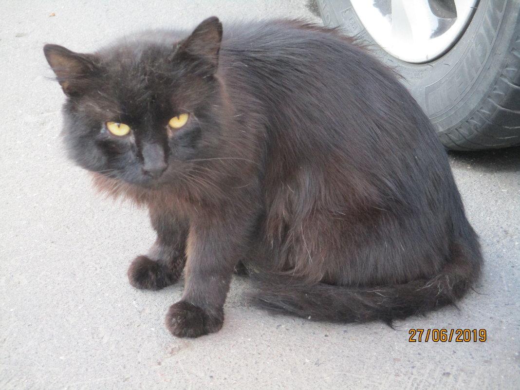 Уличный кот,многодетный отец. - Зинаида