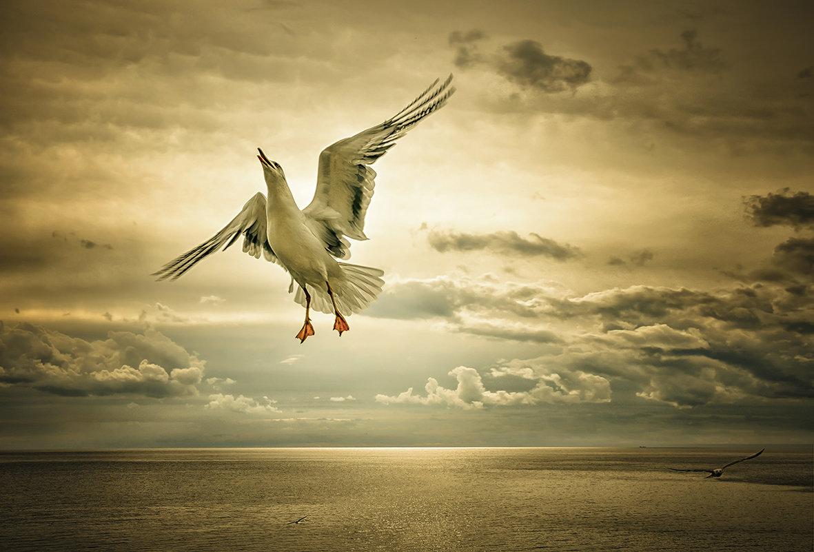 Кто видит в небе ангелов, не видит в небе птиц... - Александр Бойко