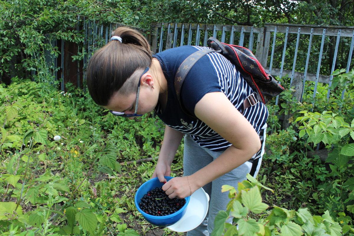Собирает урожай - Татьяна Са