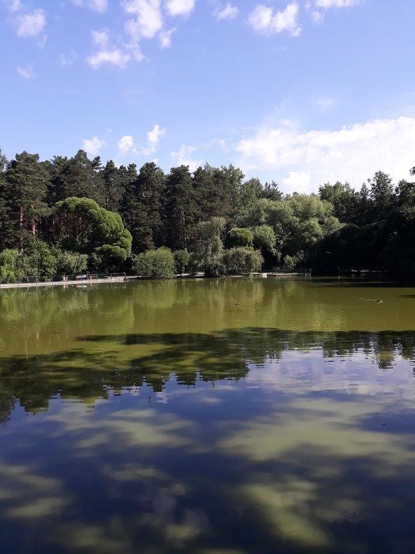 Лебединое озеро - Андрей Кобриков