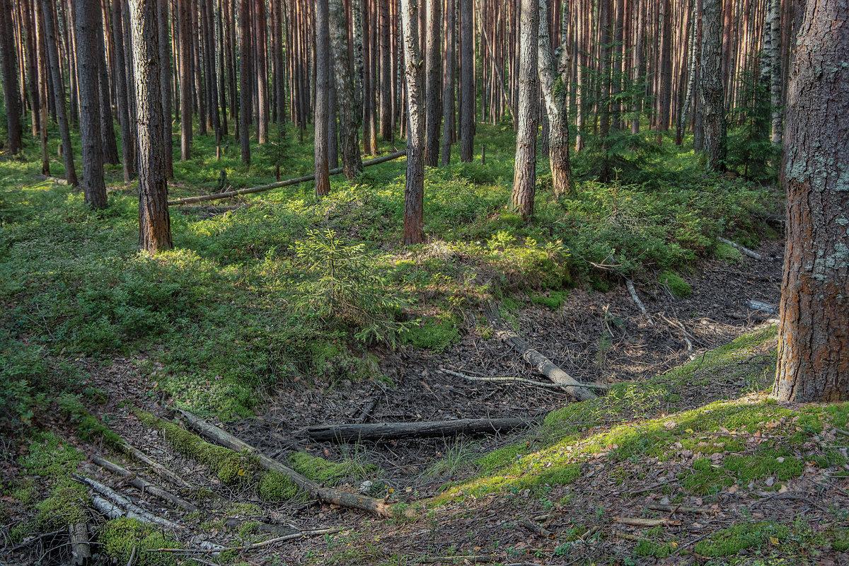 Здесь лес стоит сплошной стеной... - Михаил (Skipper A.M.)
