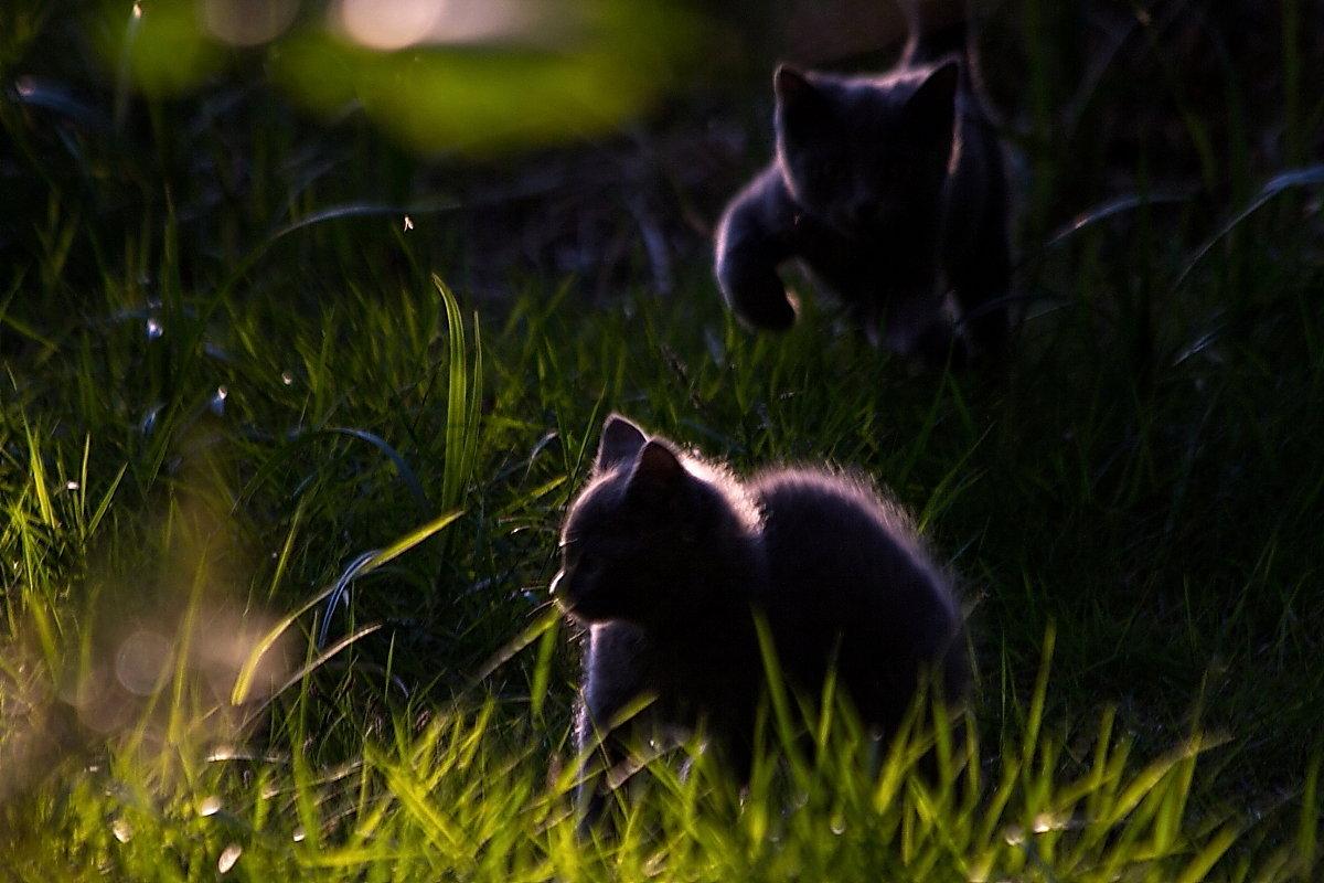 Игра котят на закате! - Андрей Соловьёв