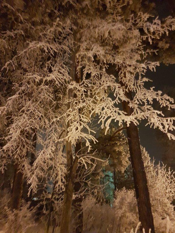 Деревья. - Евгений