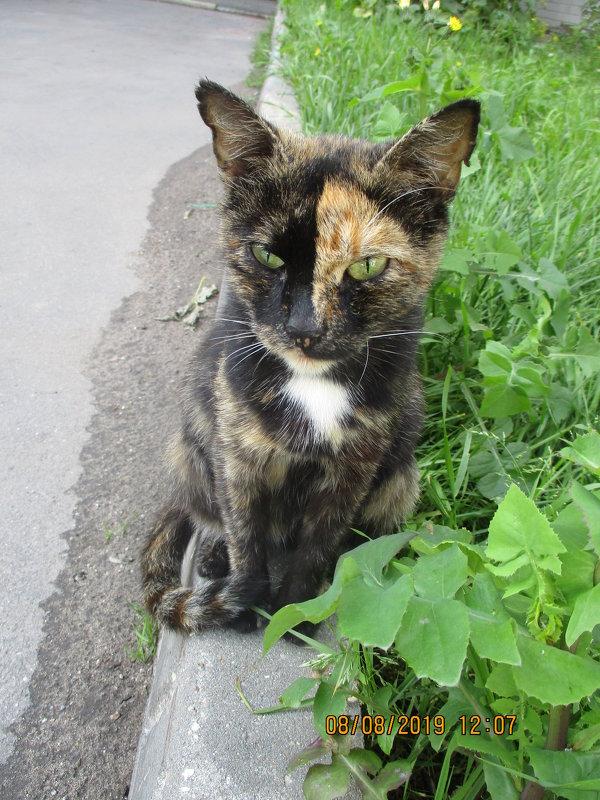 Кошка,которая гуляет сама по себе.. - Зинаида