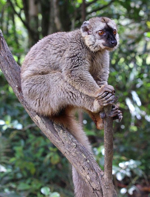 Житель Мадагаскара - Евгений Печенин