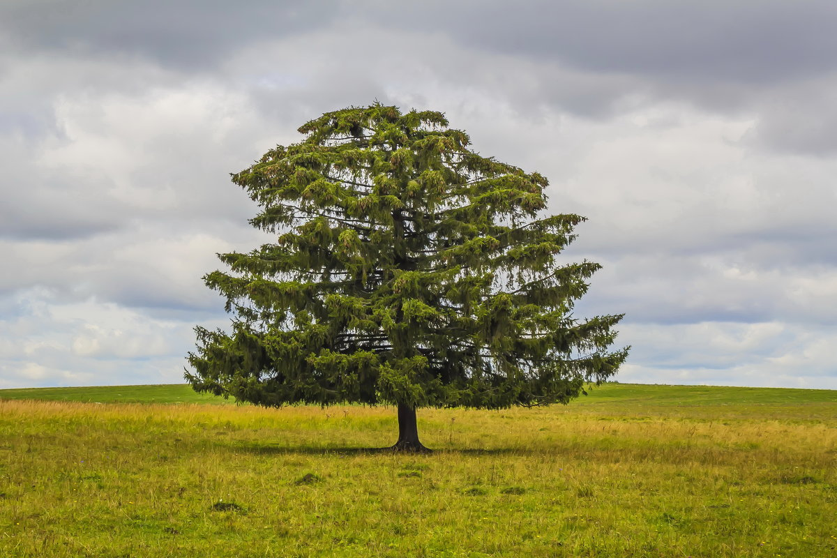 Одинокое дерево - Галина Новинская