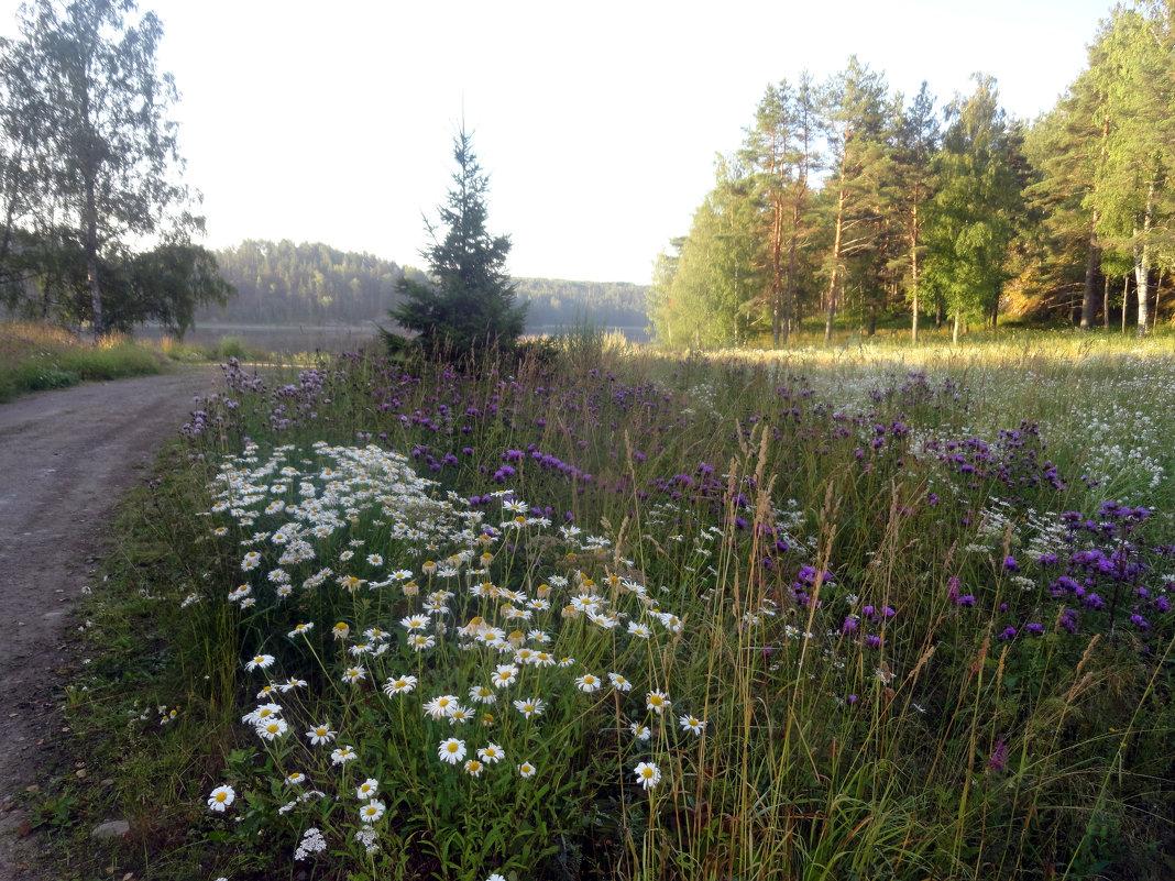 Полевые цветы - Vyacheslav Gordeev