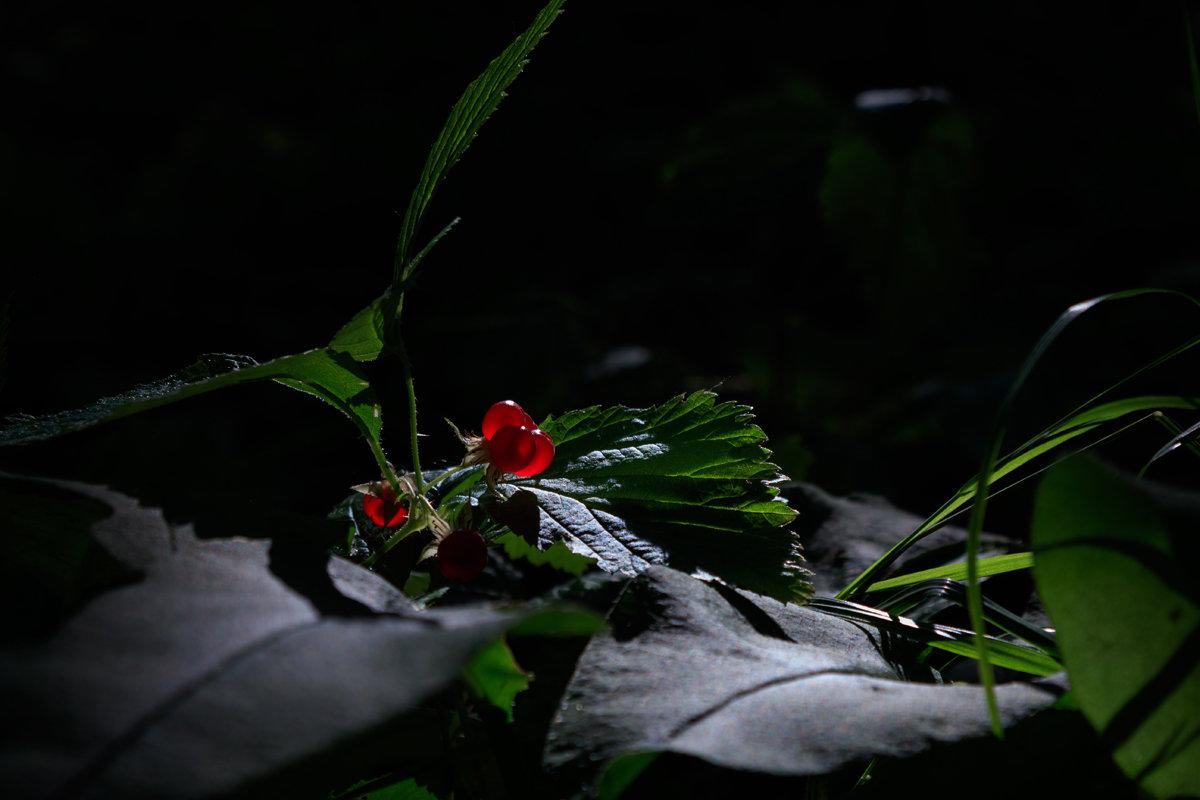 В лесу - Алексей Петропавловский