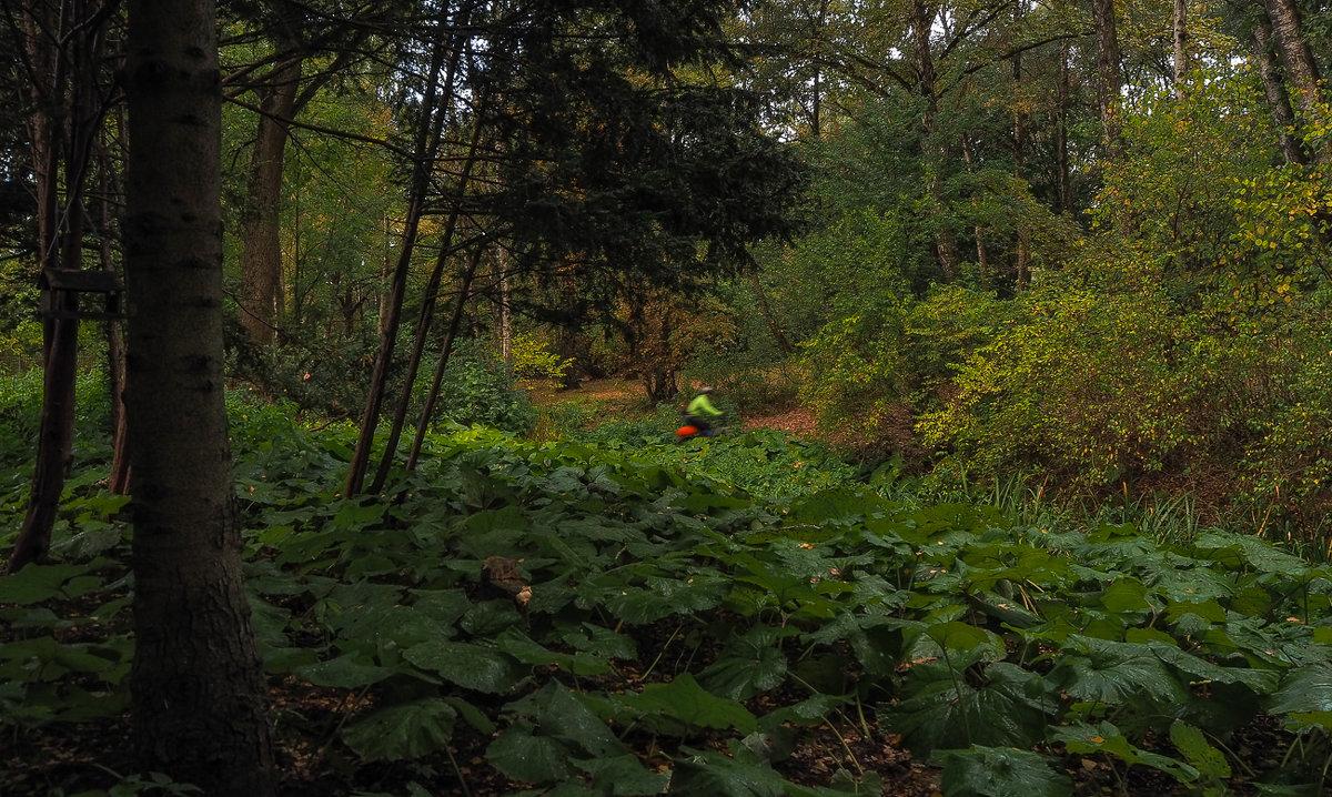 Прогулки в Осеннем Парке - юрий поляков